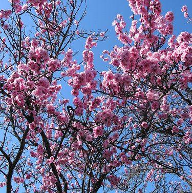 Seasonal Colours of Altona