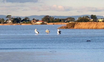 Altona – A Place of Water Abundance