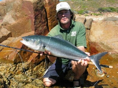 Aussie Salmon