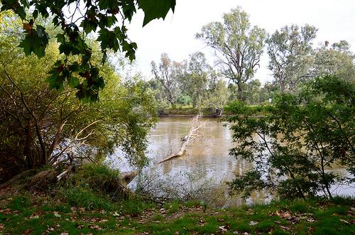 Murray River  12