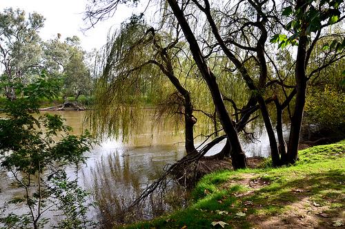 Murray River  13