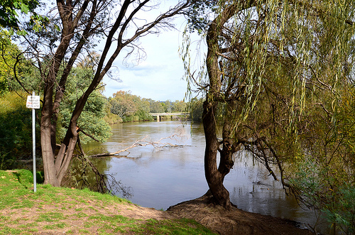 Murray River  15