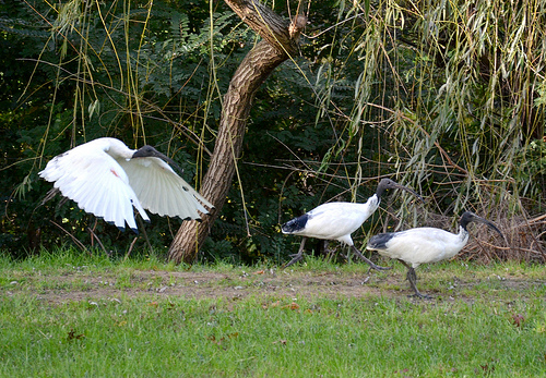 Birds @ Oddies Creek Playspace 03