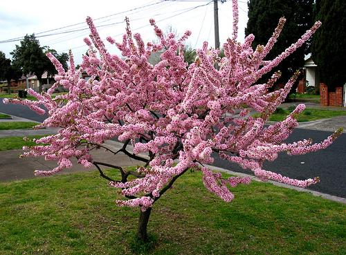 Spring Flowers 01