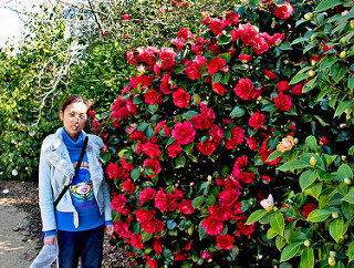 Camellia 001