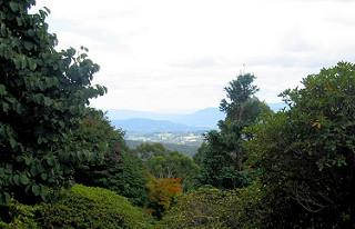 National Rhododendron Garden - Australian Alp