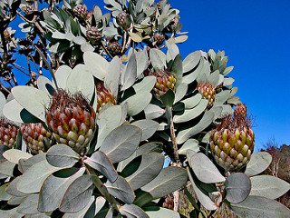 National Rhododendron Garden 27
