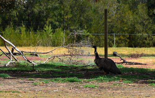 Emu 05m