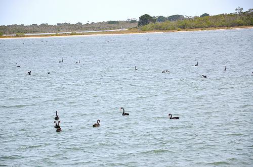 Gippsland Lakes 07
