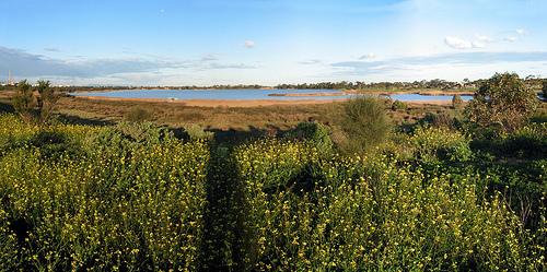 Cherry Lake C