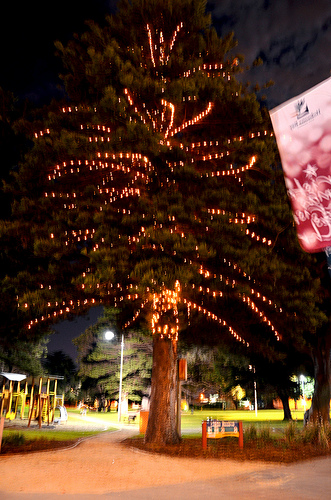 Logan Reserve Christmas Tree 02