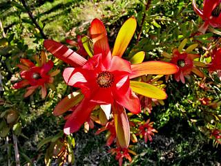 National Rhododendron Garden 16