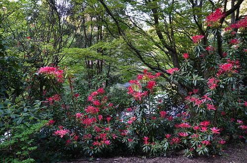 National Rhododendron Garden 10