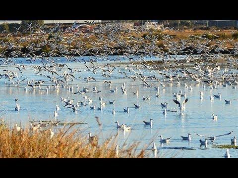 Bird Flocking