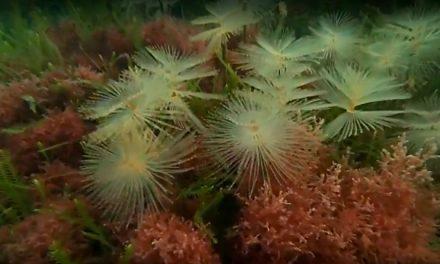 Altona Coral Gardens